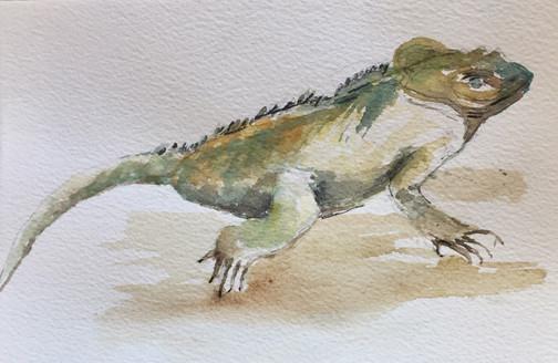 Iguane  | Jozefa peintures