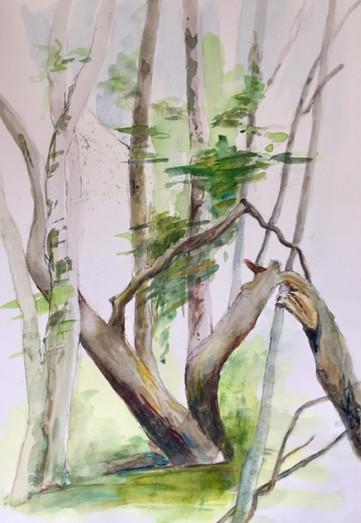 Arbres | Jozefa peintures