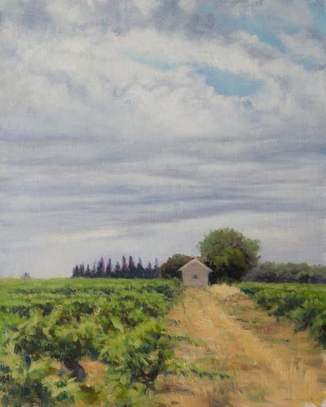 Overcast Vineyard, Provence