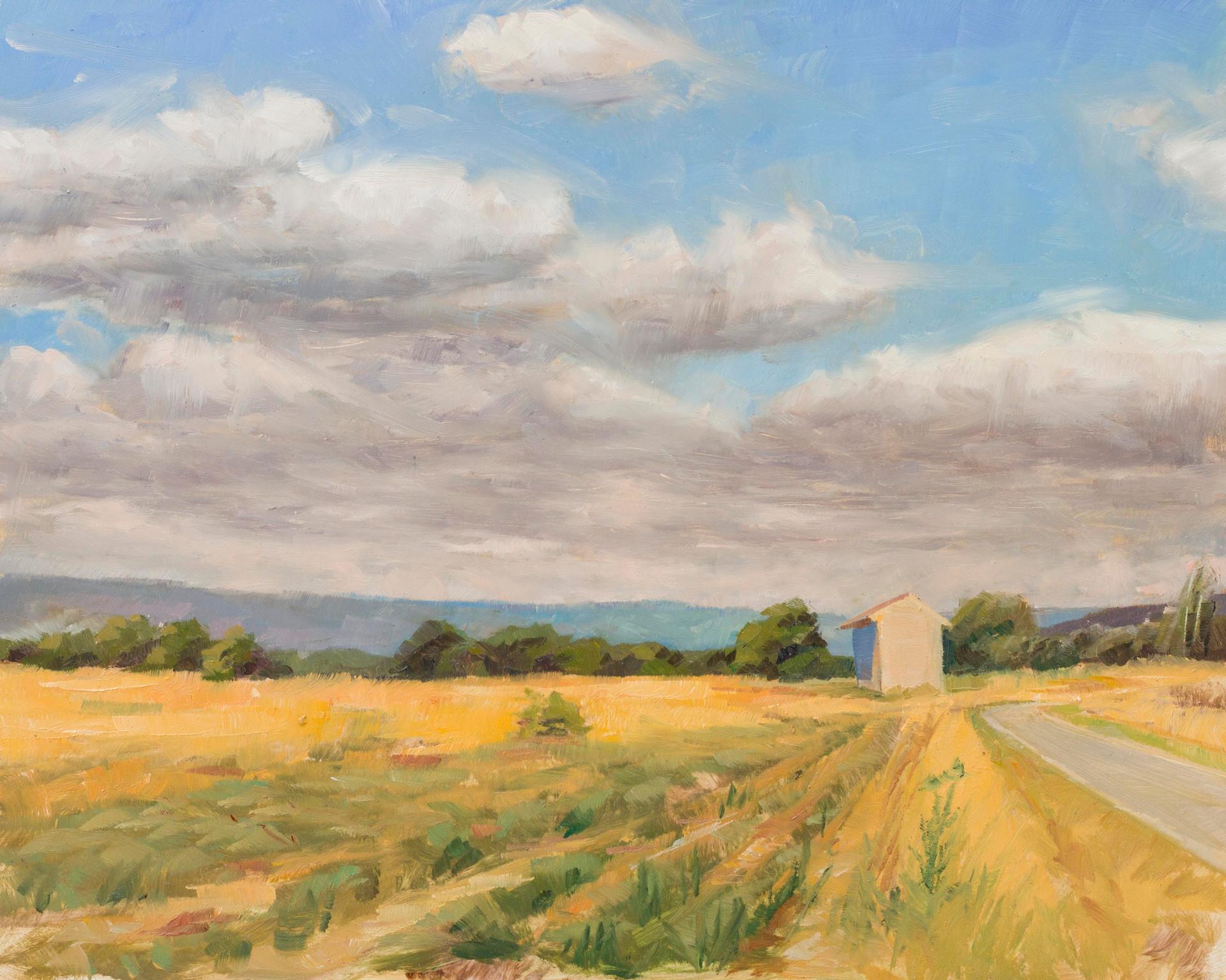 Provence, yellow fields