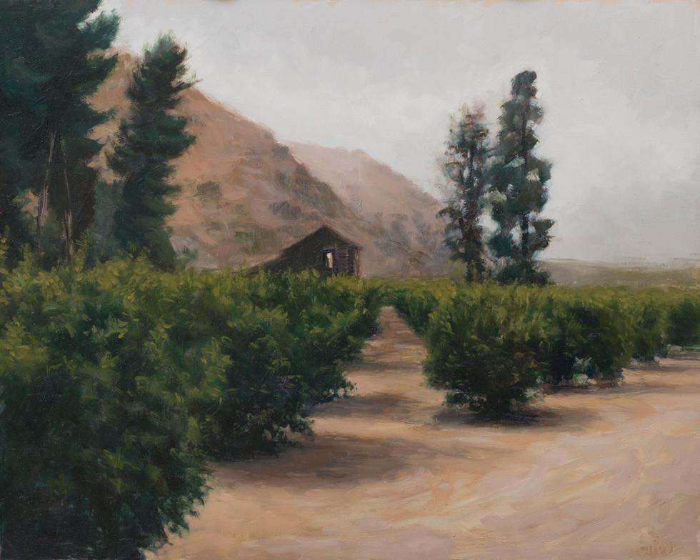 Misty Barn Orchard