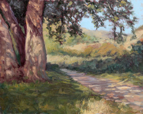Shadows at Chatsworth Park south