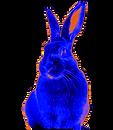 rabbit%20logo_edited_edited.png