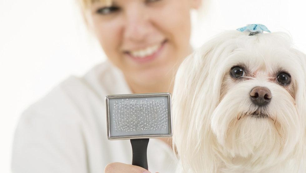 Dog%20Grooming_edited.jpg