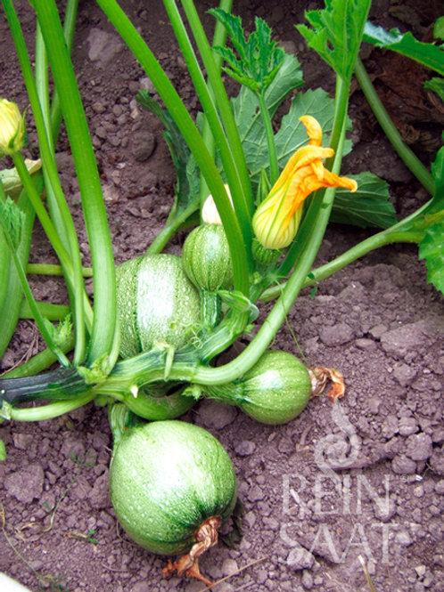"""Zucchini """"Tondo chiaro di Nizza"""" Bio"""