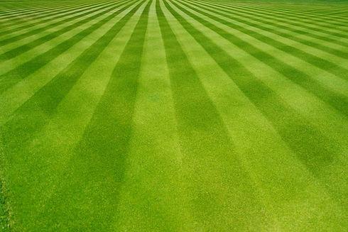 grassangle.jpg