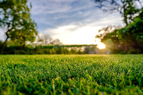 sunset-grass.jpg