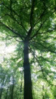 arbre Latihan.jpg