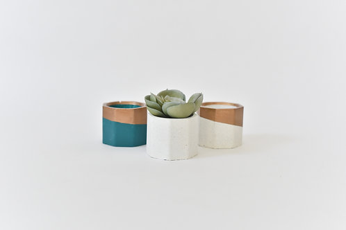 Succulent Planters with Air Plant