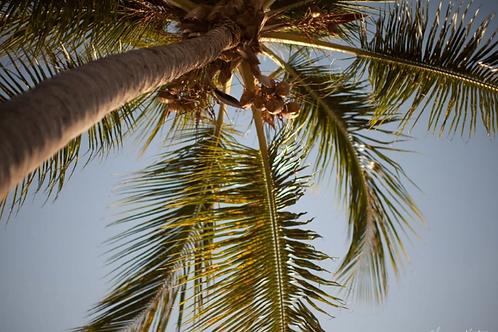 Haitian Tin Earrings + Printed Photo, Look up Palm