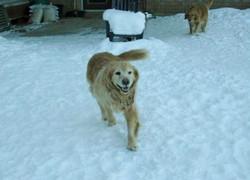 Lizzie enjoying the snow