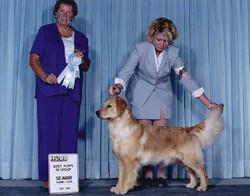 Lizzie winning Puppy group