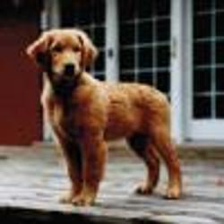 Aggie as a puppy