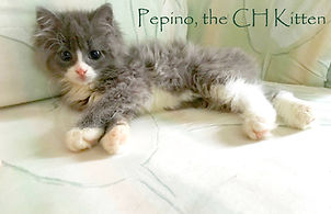 AFOC Newsletter about adopting a special needs kitten.