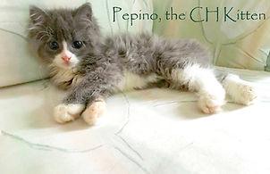 AFOC Newsletter about adopting a special needs kitten.