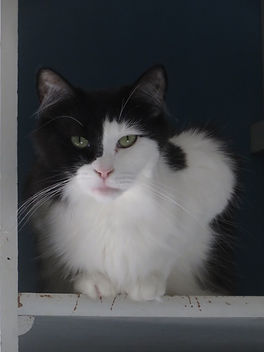 Fluff has a sponsor and lives at the Animal Friends of Connecticut no-kill shelter.
