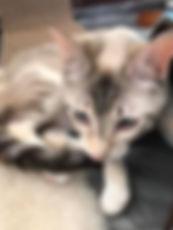 5-2020-kittens8.jpg