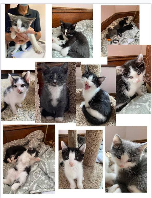 2021-kittens.jpg