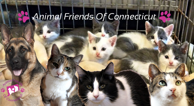 Animal Friends Of Connecticut websitebanner