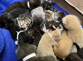 21 kittens were rescued by Animal Friends of Connecticut.
