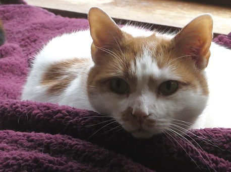 Gastone is a special cat up for adoption at the AFOC shelter.
