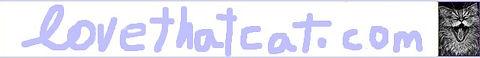 love-cat-sn-banner.jpg