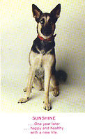 AFOC rescue of Sunshine the dog.