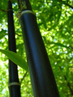 Zoom_bambous_3_©_Les_Jardins_de_Lornay.J