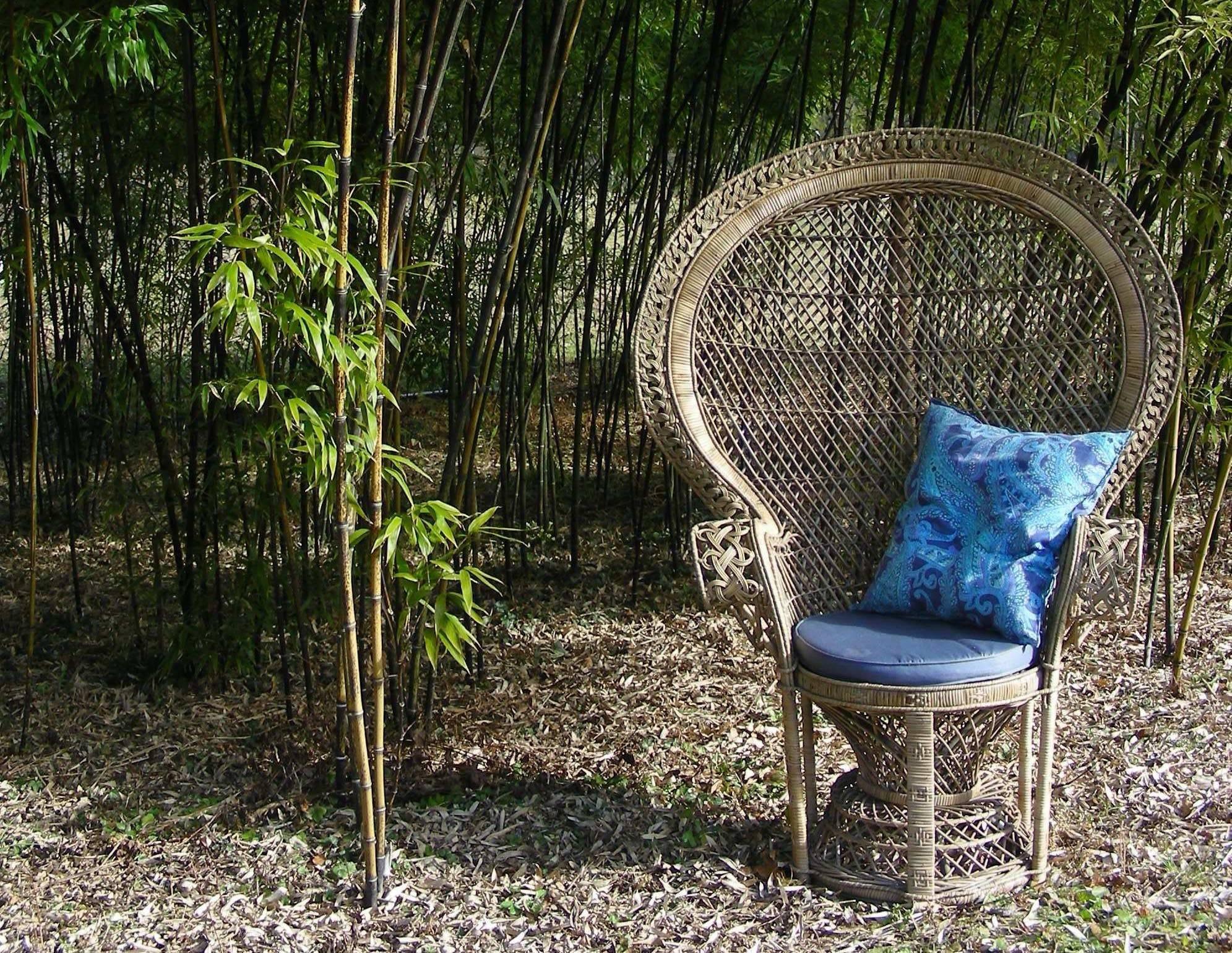 Fauteuil-Emmanuelle-bambous--Les-Jardins