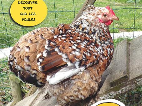 Les secrets des poules