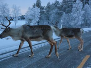 Direction la Laponie