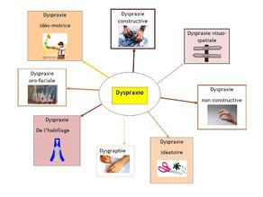 Identifier la dyspraxie : Une ou des dyspraxies