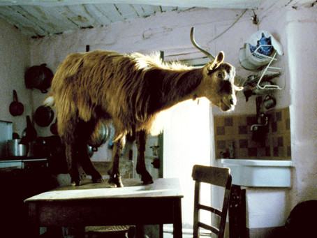ÉDITO 21es Journées cinématographiques - La Part Animale