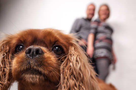 Familienfotos mit Haustier