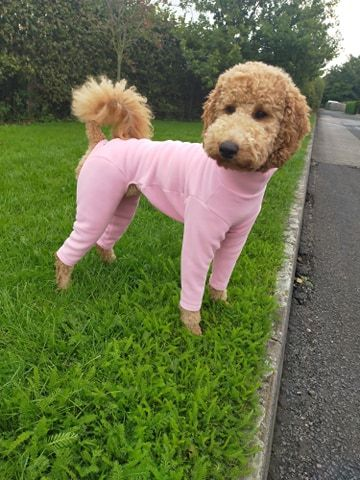 Full Dog Suit