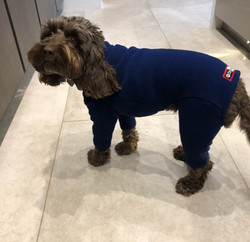 Dark Blue Full Dog Suit