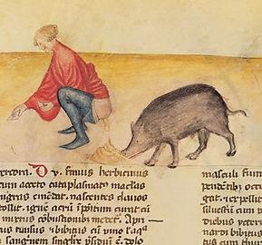 Termos do calão relacionados com o porco