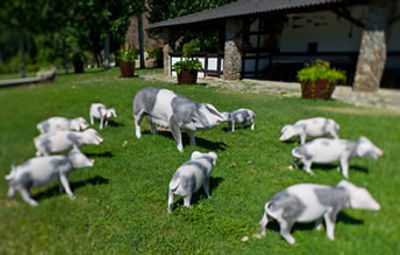 Jogos porco
