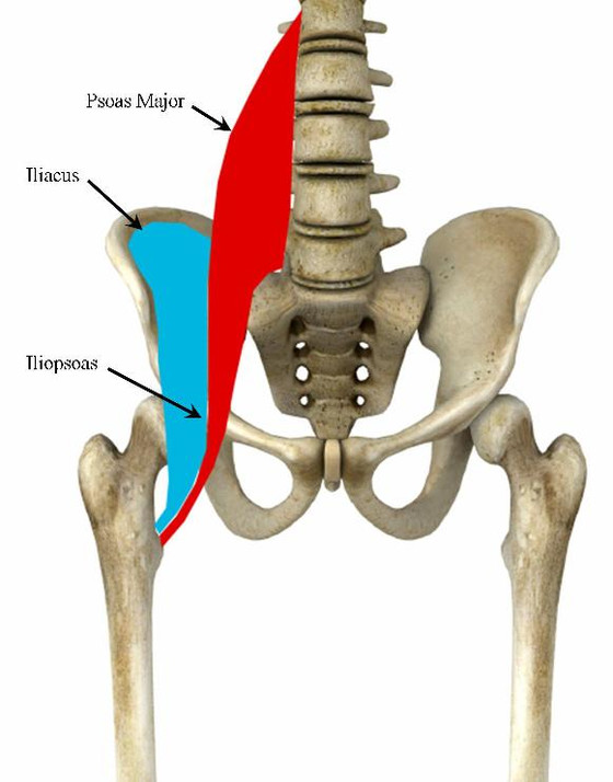 Psoas Stretches for Pregnancy
