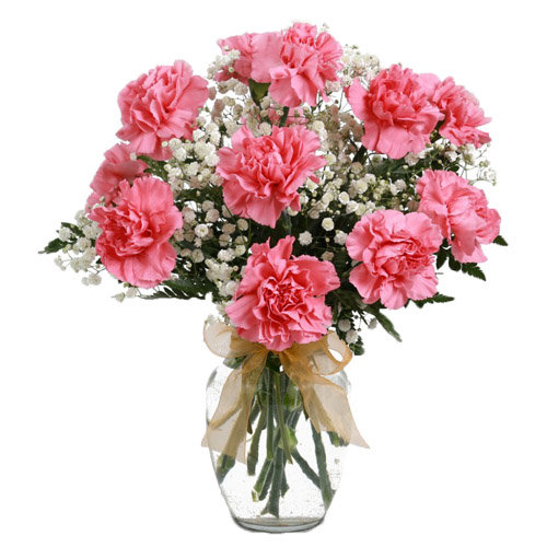 Divine Pink Carnation