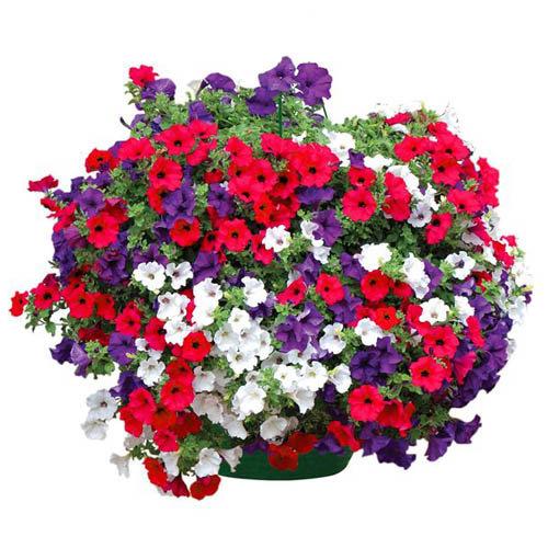 Colorful Arrangement of basket