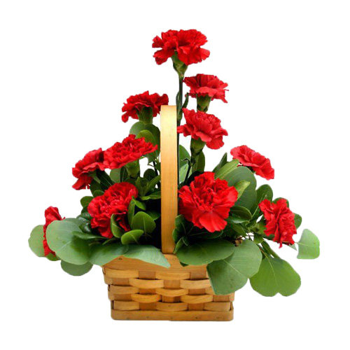 Fabulous Red Carnations
