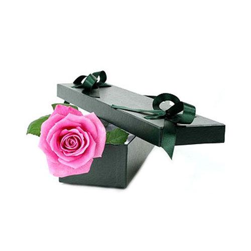 Single Pretty Pink Rose