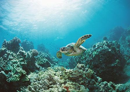 Sea%20Turtle_edited.jpg