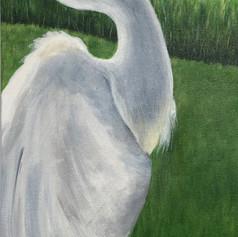 Marsh Majesty