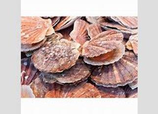 Scallops on shell