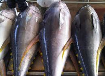 whole tuna