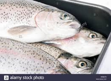 Fresh Trout-Imported