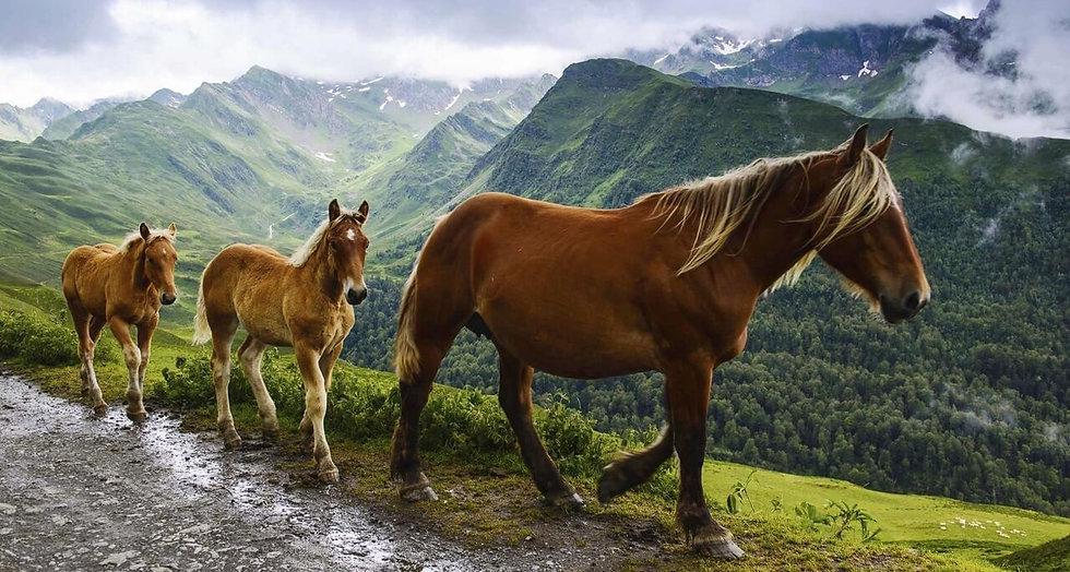 domaine-castille-pyrenees-location