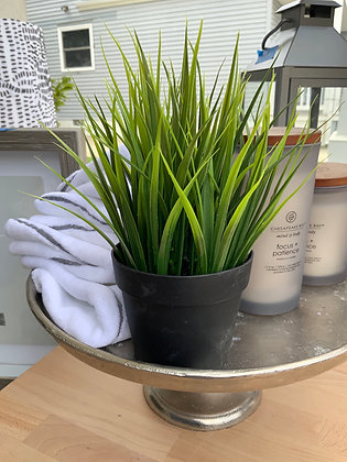 Potted Short Grass